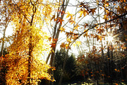 Autumn Foliage Prints - Forest sunlight Print by Les Cunliffe