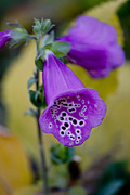 Foxglove Flowers Photos - Foxglove by Ivete Basso