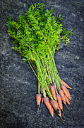 Harvested Metal Prints - Fresh carrots from garden Metal Print by Elena Elisseeva