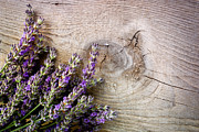Mythja Photos - Fresh lavender by Mythja  Photography