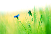 Minimalistic Art - Fresh meadow background by Michal Bednarek