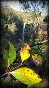 The Followers Photo Prints - Frizroy falls Sydney Print by Henry Adams