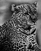 Black Leopard Prints - Furry Leopard Print by Jerry Winick