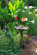 Birdbath Posters - Garden Magic Poster by Suzanne Gaff