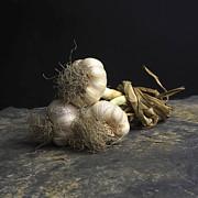 Garlic Print by Bernard Jaubert