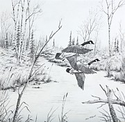 Autumn Landscape Drawings - Geese in Flight by Gary McDonnell