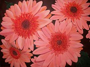 Flower Center Paintings - Gerber Daisies by Sharon Duguay