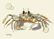 Anne Beverley - Ghost Crab