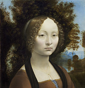 Portraits Paintings - Ginevra de Benci by Leonardo Da Vinci