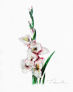 Green Foliage Drawings Prints - Gladiolus Print by Danuta Bennett