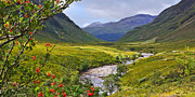 Jane Mcilroy Metal Prints - Glen Etive Scotland Metal Print by Jane McIlroy