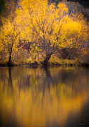 Golden Pond Framed Prints - Golden Pond Framed Print by Steven Milner