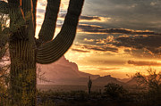 Southwest Landscape Metal Prints - Golden Sunrise  Metal Print by Saija  Lehtonen