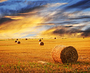 Autumn Landscapes Prints - Golden sunset over farm field with hay bales Print by Elena Elisseeva
