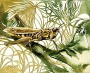 Alfred Ng - grasshopper