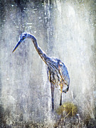 Mother Nature Photos - Great Blue Heron - Ardea herodias by Mother Nature