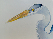 Great Blue Heron Paintings - Great Blue Heron by Jason M Silverman