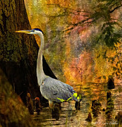 Cypress Digital Art Prints - Great Blue Heron Slowly Fishing Print by J Larry Walker