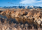 Great Migration Prints - Great Salt Lake Utah Print by Utah Images