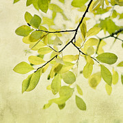 Tree Leaf Photo Prints - Green Foliage Series Print by Priska Wettstein
