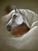 White Horses Pastels Framed Prints - Grey arabian horse Framed Print by Angel  Tarantella