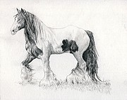 Gypsy Drawings Prints - Gypsy Cob Horse Portrait Print by Olde Time  Mercantile