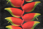 Bract Framed Prints - Heliconia rostrata Framed Print by Sharon Mau