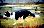 Collie Digital Art Posters - Herding Poster by Barbara  Sellers