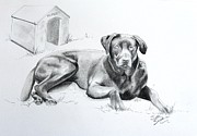 Custom Pet Drawing Prints - Hershey Print by Joette Snyder