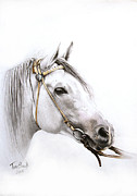 Horse Drawing Posters - Horse Portrait Poster by Tamer Elsharouni