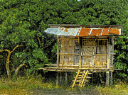 Rusted Tin Roof Photos - Humble Abode by Douglas J Fisher