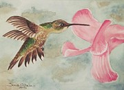 Tonya Butcher Framed Prints - Humming Bird Framed Print by Tonya Butcher