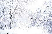 2012 Art - Hurricane Sandy Snow  by Thomas R Fletcher