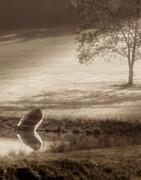 In Quiet Solitude Print by Tom Mc Nemar