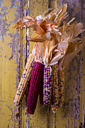 Garry Gay - Indian Corn