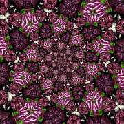 Cabbage Prints - Kaleidoscope Raddichio Lettuce Print by Amy Cicconi