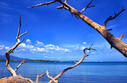 Puerto Rico Photo Prints - Las Cabezas Bay Print by Thomas R Fletcher