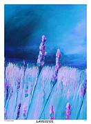 Lavender Fields Drawings Framed Prints - Lavender Framed Print by Eric  Schiabor