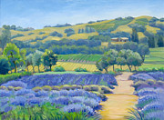 Dominique Amendola Prints - Lavender field Print by Dominique Amendola