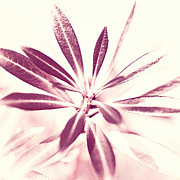 Photographs Digital Art - Leaves Dancing in the Sunlight Abstract by Natalie Kinnear