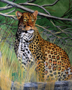 Leopards Paintings - Leopard In Waiting by Cheryl Poland