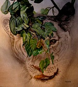 Lioness Drawings Posters - Lioness on the Hunt Poster by Sylvie Heasman