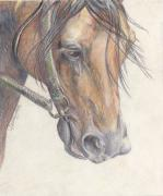 Arabian Desert Art Drawings - Listening by Callie Smith