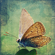 Insects Mixed Media Posters - Little Butterfly Poster by Angela Doelling AD DESIGN Photo and PhotoArt