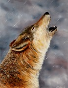 Wolf Howling Paintings - Lone Wolf by Alan Conder