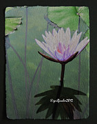 Stamen Mixed Media Originals - Lotus3 by Gail Fischer