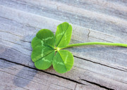 Good Luck Photo Prints - Lucky Print by Kristin Elmquist