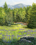 Elaine Farmer - Lupine at Sugar Hill