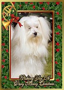 Maltese Dog Posters - Maltese Dog Christmas Poster by Olde Time  Mercantile