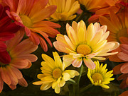 Barbara Smith Metal Prints - Mango Mum Metal Print by Barbara Smith
